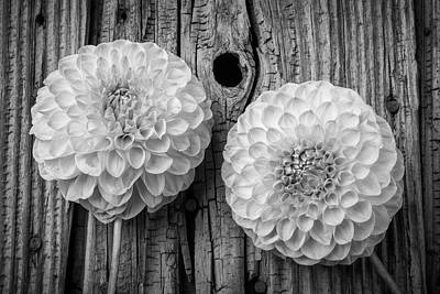 Knotholes Photograph - Two Black And Whte Dahlias by Garry Gay