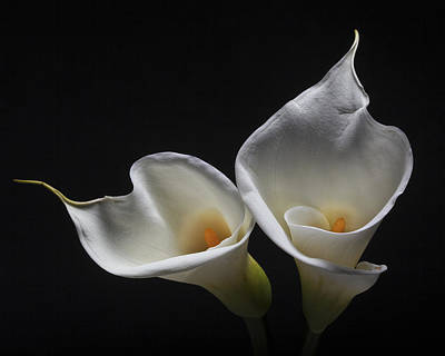 Two Calla Lilies Print by George Oze
