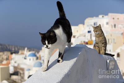 Gray Tabby Photograph - Two Cats, Cyclades Islands by Jean-Louis Klein & Marie-Luce Hubert