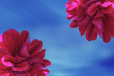 Floral Digital Art - Two Dahlia Flower by Ridwan Photography