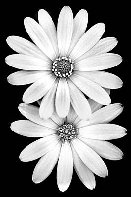 Black And White Photograph - Two Flowers by Az Jackson