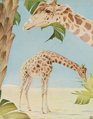 Two Giraffes Print by Art Museum