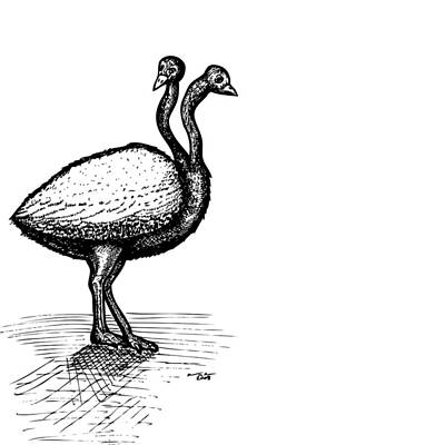 Ostrich Drawing - Two Headed Ostrich by Karl Addison