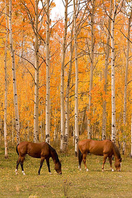 Two Horses Grazing In The Autumn Air Print by James BO  Insogna
