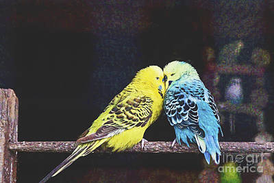 Lovebird Digital Art - Two Love Birds by Diane Macdonald