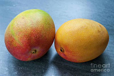 Mango Photograph - Two Mangos by Elena Elisseeva