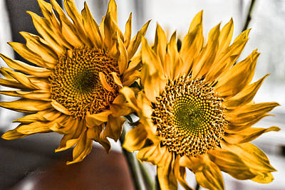 Sunflower Photograph - Two Of A Kind by Sharon Popek