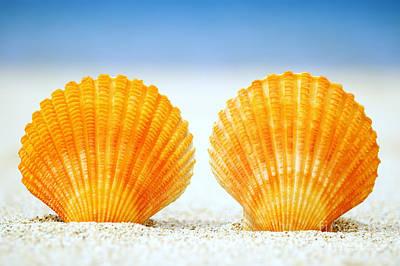 Outdoor Still Life Photograph - Two Orange Scallop Shells by Mary Van de Ven - Printscapes