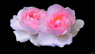 Two Pink Roses Print by JoAnn Lense