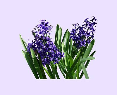 Floral Photograph - Two Purple Hyacinths by Susan Savad