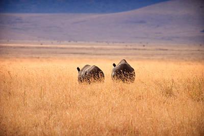 Two Rhino's Print by Adam Romanowicz