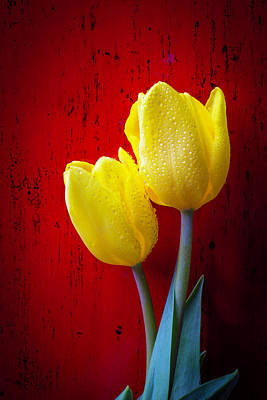 Yellow Tulips Photograph - Two Tulips Against Red Wall by Garry Gay