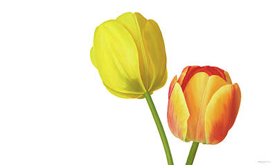 Two Tulips Print by Rita Magos