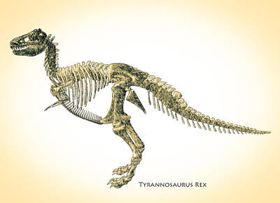 T-rex Digital Art - Tyrannosaurus Rex Skeleton by Bob Orsillo