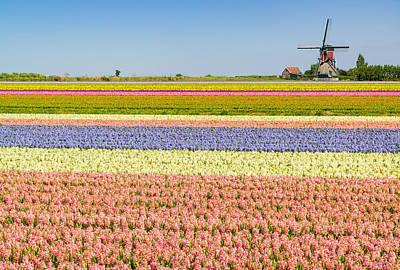 Dutch Hyacinth Photograph - Ultimate Netherlands by Johan Elzenga