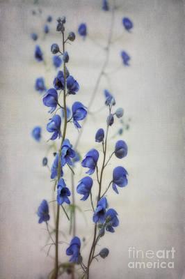 Vertical Format Photograph - Ultramarine  by Priska Wettstein