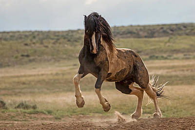 Washakie Photograph - Unbridled by Sandy Sisti
