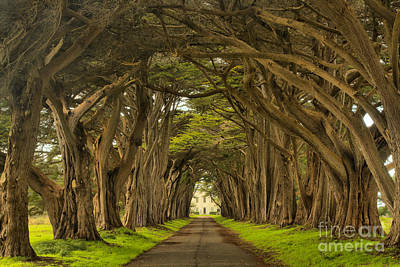 Under The Cypress Canopy Print by Adam Jewell