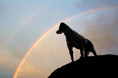 Under A  Rainbow Print by Flying Z Photography By Zayne Diamond