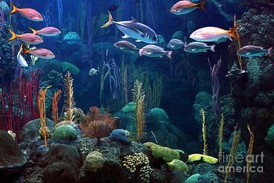 Under The Sea 3 Print by Randy Matthews