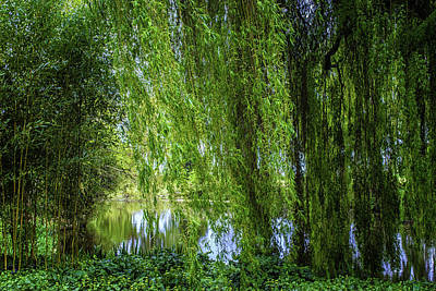 Under The Willow Tree Print by Martin Newman
