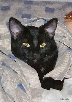Kitties Digital Art - Undercover Kitten by Jeff Kolker