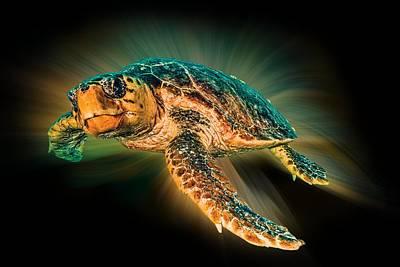 Undersea Photograph - Undersea Turtle by Debra and Dave Vanderlaan