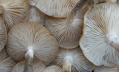 Underside Of Mushrooms Print by Greg Adams Photography