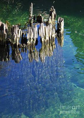 Bald Cypress Stump Photograph - Underwater Cypress Stump by Carol Groenen