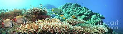 Undersea Photograph - Underwater Panorama by MotHaiBaPhoto Prints