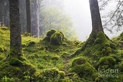 Landscape Photograph - Underwood by Yuri Santin