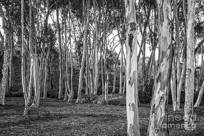 University Of California Photograph - University Of California San Diego Landscape by University Icons