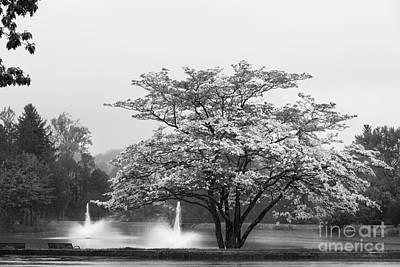 Uconn Photograph - University Of Connecticut Landscape by University Icons