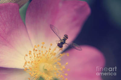 Wasp.insect Digital Art - Unt 01 by Aimelle