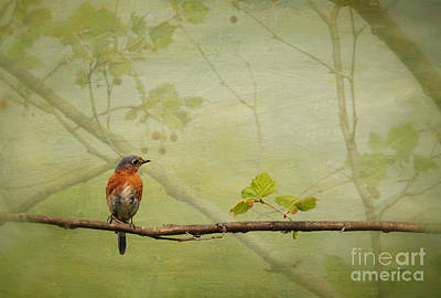 Bluebird Digital Art - Until Spring by Lois Bryan