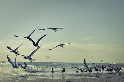 Flock Of Bird Photograph - Up Up And Away by Laura Fasulo