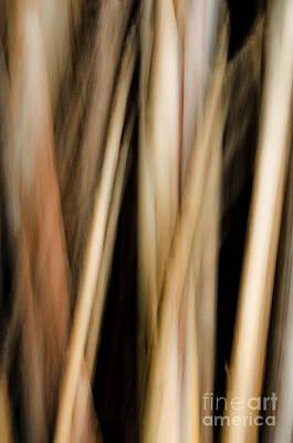 Abstract Movement Photograph - Upwards by Emilio Lovisa