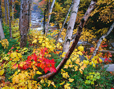 Lush Photograph - Usa, New Hampshire, White Mountains by Panoramic Images