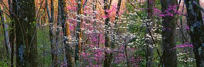 Redbud Photograph - Usa, Virginia, Shenandoah National Park by Panoramic Images