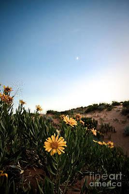 Utah Coral Sand Dune Flowers Print by Ryan Kelly