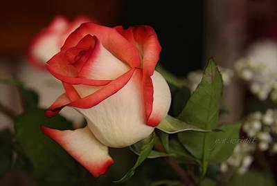 Hoodie Digital Art - Valentine Rose by Yvonne Wright