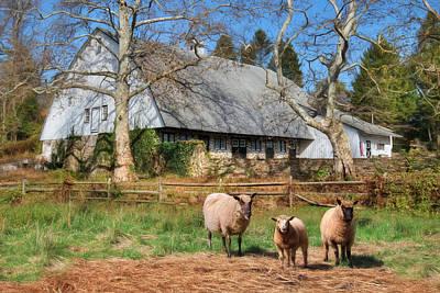 Sheep Mixed Media - Valley Forge Sheep Farm by Lori Deiter
