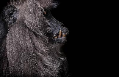 Monkey Photograph - Vanity by Paul Neville