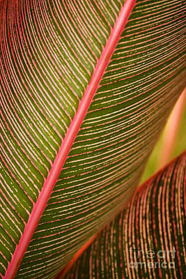 Variegated Ti-leaf 1 Print by Ron Dahlquist - Printscapes