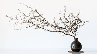 Vase Photograph - Vase And Branch by Prbimages
