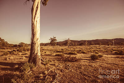 Pasture Scenes Photograph - Vast Pastoral Australian Countryside  by Jorgo Photography - Wall Art Gallery