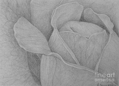 Blending Drawing - Veined Rose by Emily Young