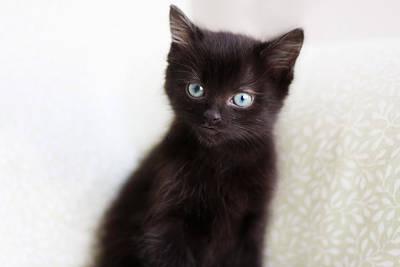 Black Cat Photograph - Velvet by Amy Tyler