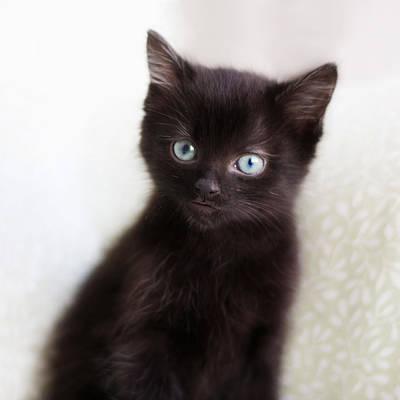 Black Cat Photograph - Velvet - Square Version by Amy Tyler