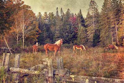 Belgian Draft Horse Photograph - Vermont Horse Farm In Autumn by Joann Vitali